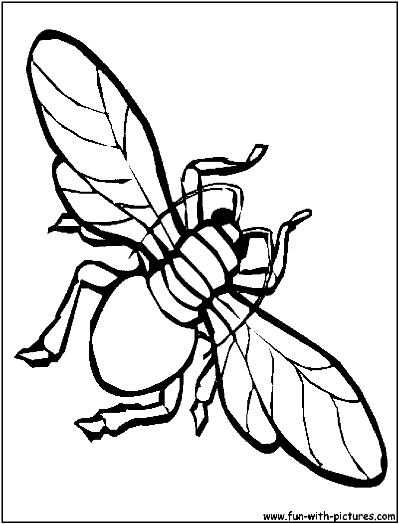 funny fly insects coloring pages - photo#21