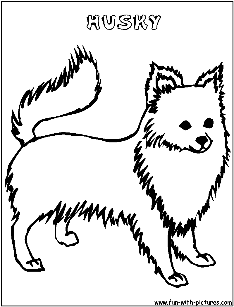 - Husky Coloring Page