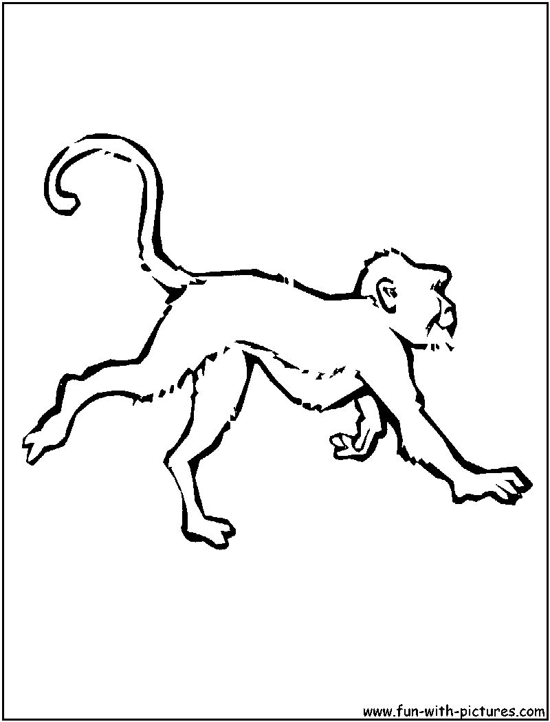 Free Realistic Monkey Coloring Pages, Download Free Clip Art, Free ... | 1050x800