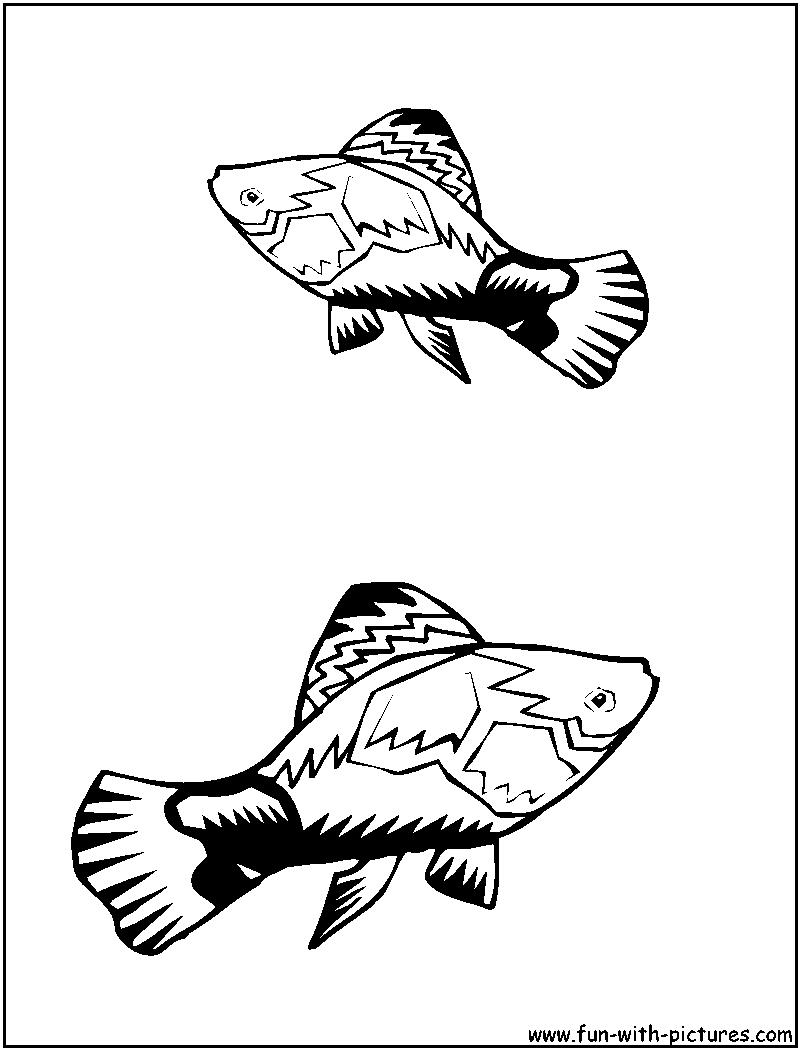 swordtail fish coloring pages - photo#5