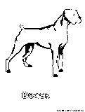 Bedlingtonterrier Coloring Page