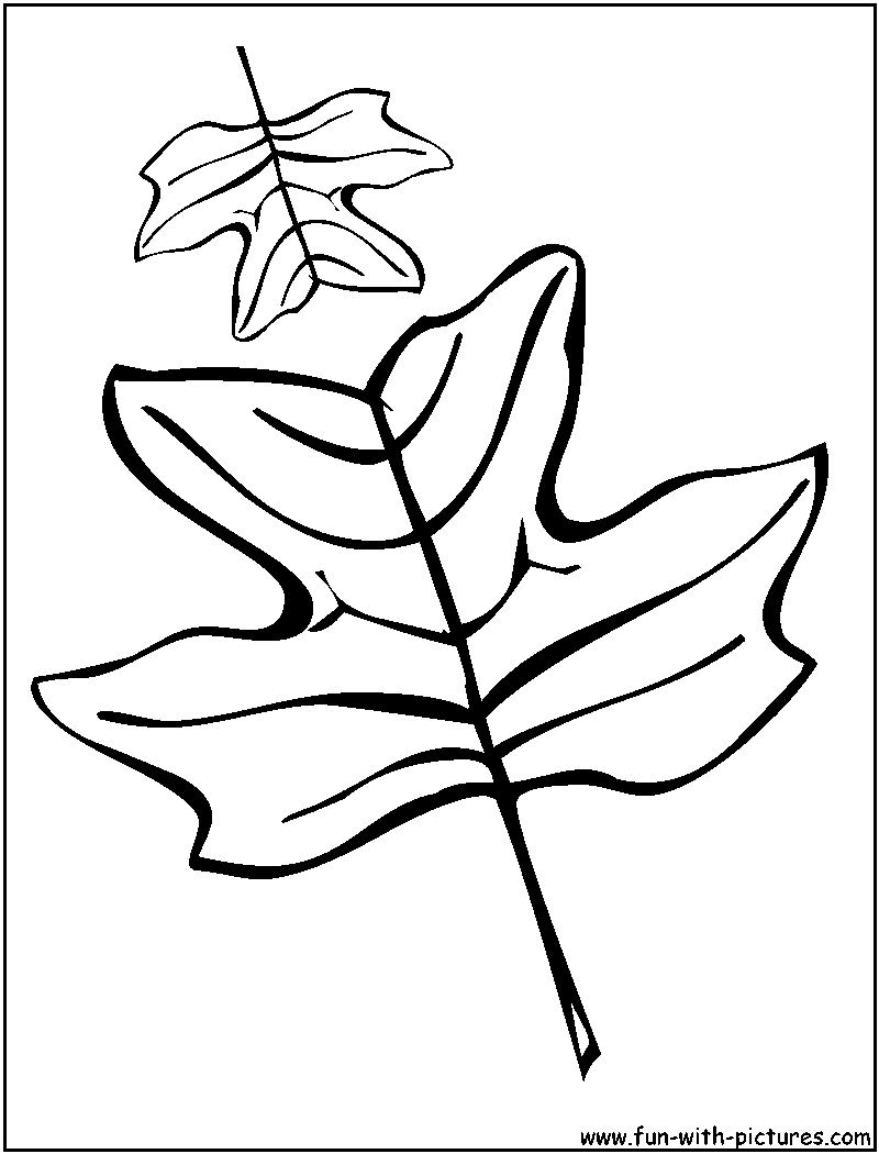 Tulip Tree Leaves Coloring Page