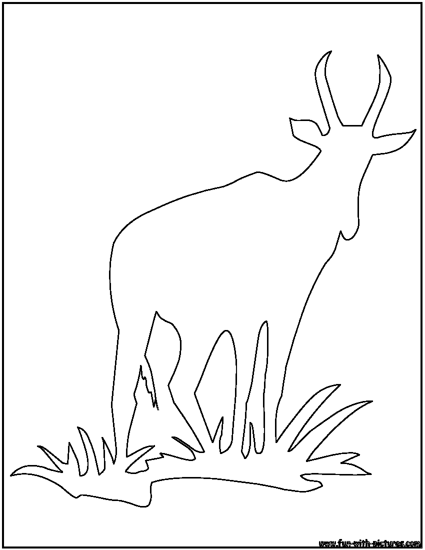 African Animal Outlines Coloring